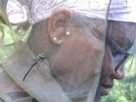 This dragonfly landed on Amina to eat a deer fly it had caught!